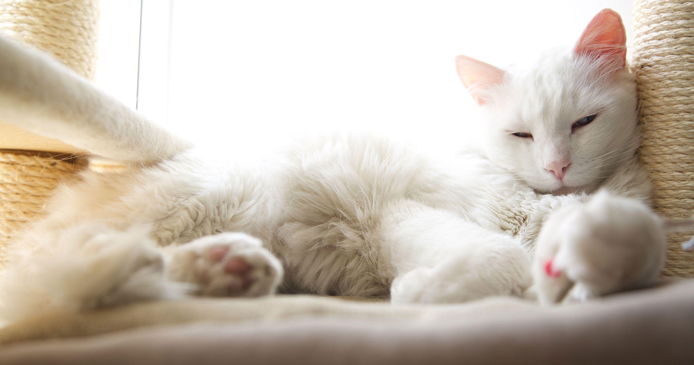 Sleepy kitten on bed
