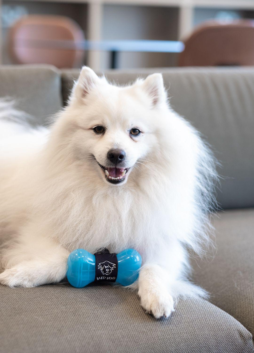 Koda loves his home-made treats in his Twist 'N' Treat